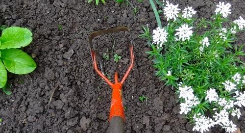 Boden oft auflockern und umgraben schnecken bek mpfen for Boden umgraben